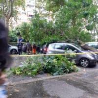 Maltempo a Roma, crolla un albero su  tre auto in sosta
