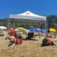 Eros e Blu, i cani bagnino in azione sulla spiaggia di Sperlonga