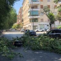 Roma, cade ramo in strada: travolti padre e figlia in motorino, ferite lievi