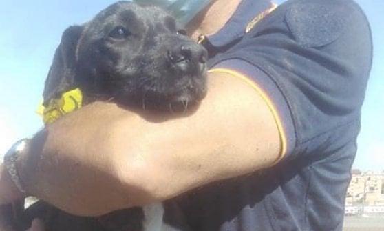 Roma, adottano un cane e se lo lasciano scappare 2 ore più tardi: ritrovato dopo 15 giorni sulla Tangenziale