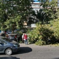 Ostia, albero cade su un'auto: nessun ferito