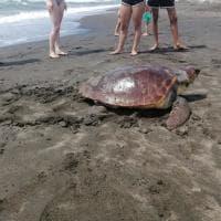 Cerveteri, le tartarughe fanno il nido: attesa per la schiusa