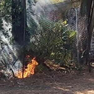 Fuoco a Villa Sciarra, bruciano arbusti e cipressi