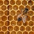 """Test dna per selezionare """"api massaie"""": tirano a lucido l'alveare contro le malattie"""