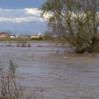 Novara, l'onda di piena arriva in pianura e devasta i campi