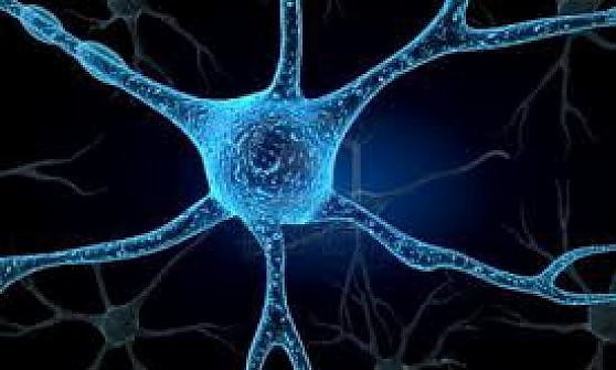 Scoperto il meccanismo che regola malattie come Sla, sclerosi multipla ed epilessia