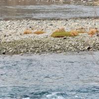 Siccità record in Piemonte: il lago Maggiore è sceso di un metro