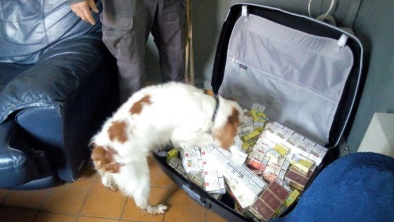 """Torino: storia di Zoe, primo cane anticontrabbando addestrato a """"fiutare tabacco"""""""
