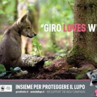 """Francesca Marucco: """"Solo un lupo ogni 100 km quadrati, sulle Alpi convivenza possibile"""""""