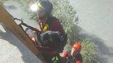 L'intervento dei pompieri per salvare il meticcio Beppe caduto nella Dora