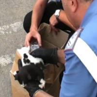Chivasso, tortura e uccide gattini nel giardino di casa: inchiesta dei carabinieri