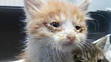 Ivrea, gattini gettati  da un'auto, li salvano  due ragazzi