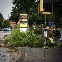 Maltempo nel Torinese, allarme per allagamenti e alberi pericolanti