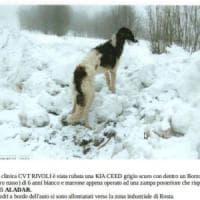 Torino, cane muore di caldo dentro l'auto rubata