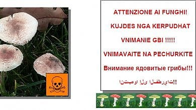 """""""Attenti ai funghi"""": dopo gli avvelenamenti l'appello dell'Asl Torino 1 è multietnico"""