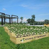 A Casale i fiori bianchi di Gea per ricordare le vittime future dell'amianto