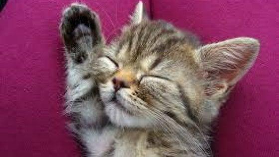 Vercelli: teppisti sparano a una gatta, per salvarla si scatena una gara di solidarietà