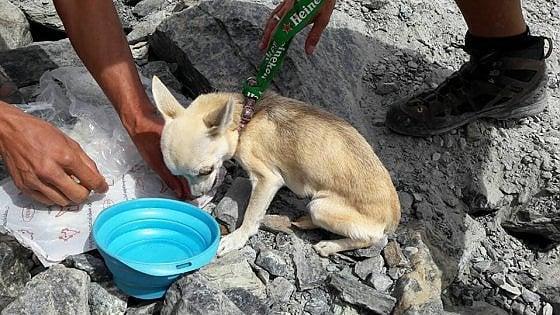 Monte Rosa, il miracolo della chihuahua smarrita: sopravvissuta 18 giorni a 2500 metri di quota
