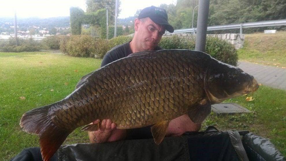 """Biella, il """"re delle carpe"""" pesca e rilascia un gigante da 25 chili"""