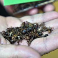Il debutto degli insetti al Salone del Gusto di Torino
