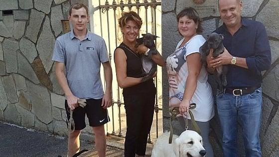 Torino quattro cani sequestrati per errore scoppia un for Quattro ristoranti torino