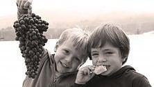 La vendemmia  dei bambini  nelle vigne di Langa
