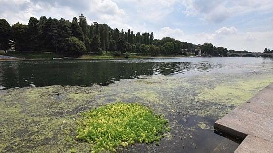 Torino, piante esotiche nel Po: lunedì un nuovo intervento