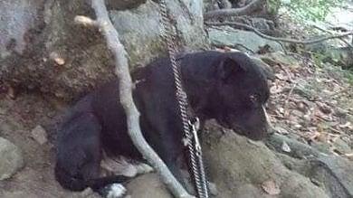 Pinerolo, cane abbandonato in mezzo ai boschi, legato e  senza cibo e acqua