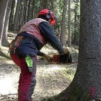 Il ramo tagliato urta i cavi dell'elettricità: boscaiolo folgorato in Val