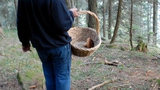 Torino, cercatore di funghi di 22 anni precipita in montagna e muore