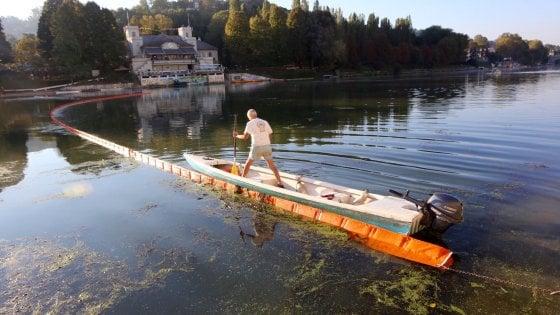 Secondo intervento sul Po per eliminare l'alga tropicale invasiva