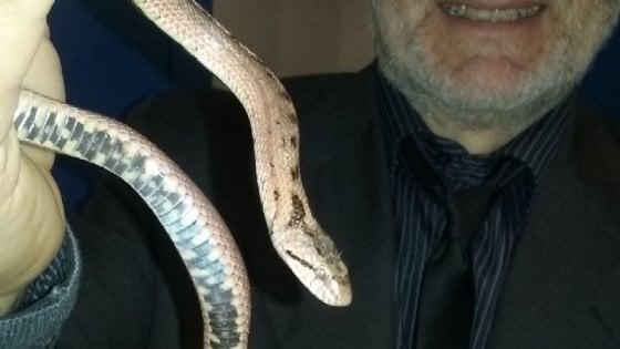 """Collegno, allarme per un serpente nei pressi di una casa di riposo: """"E' una vipera""""."""