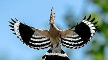 """""""Il cielo sull'acqua""""  gli uccelli del parco fluviale Gesso e Stura"""