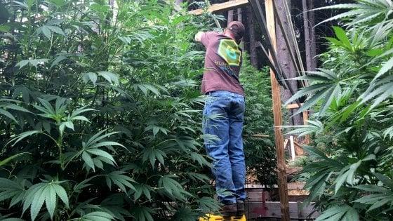 Appendino firma il progetto di legge popolare per la legalizzazione della cannabis