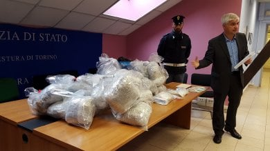 Torino, il garage della droga:  maxisequestro di marijuana e cocaina, vale 300mila euro