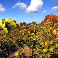 Il regalo dell'autunno alle colline del Monferrato: colori mozzafiato tra i vigneti
