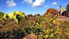Il regalo dell'autunno  al Monferrato: colori mozzafiato tra i vigneti