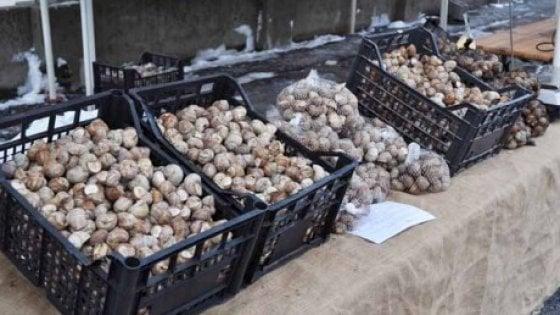 Borgo san dalmazzo celebra le lumache tra fiera mercato e for Materassi borgo san dalmazzo