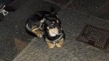 Per ore sotto casa della sua amata, il cane Rum intenerisce San Salvario