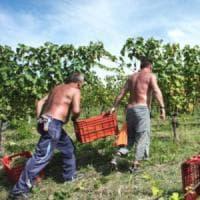 Vendemmia, per il Piemonte un grande 2016 ma serve più sostenibilità in vigna ed economica