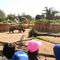 Torino, addio a Freddy il rinoceronte del Bioparco idolo dei bambini