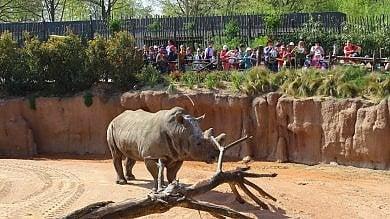 Addio a Freddy il rinoceronte del Bioparco Zoom idolo dei bambini