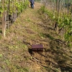 La musica del maestro Vessicchio per curare le vigne sulle colline del Roero