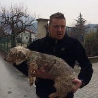 Erano davvero lupi quelli che hanno attaccato un uomo e il suo cane a Giaveno,