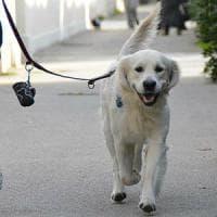 Domodossola, esame del dna sugli escrementi dei cani per multare i proprietari