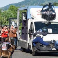 Torino, poliziotti-fantoccio investiti durante il corteo pro cannabis: l'immagine shock...