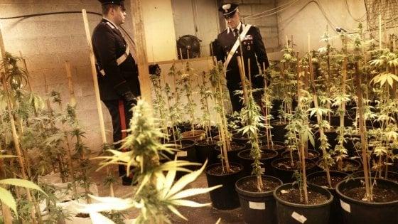 Canavese smantellata fabbrica di marijuana due arresti for Priolo arredamenti torino