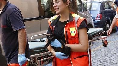 Torino, incendio in un alloggio del centro: 18 intossicati, gatto si lancia dal balcone   Gallery. Le foto dei soccorsi