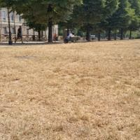 """""""Effetto savana"""": così la siccità ha trasformato i giardini nel cuore di Torino"""