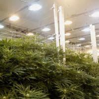 Giardiniere disoccupato, coltiva e spaccia marijuana: